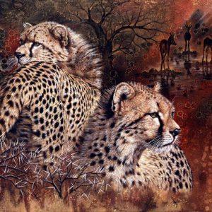 Back to back cheetah